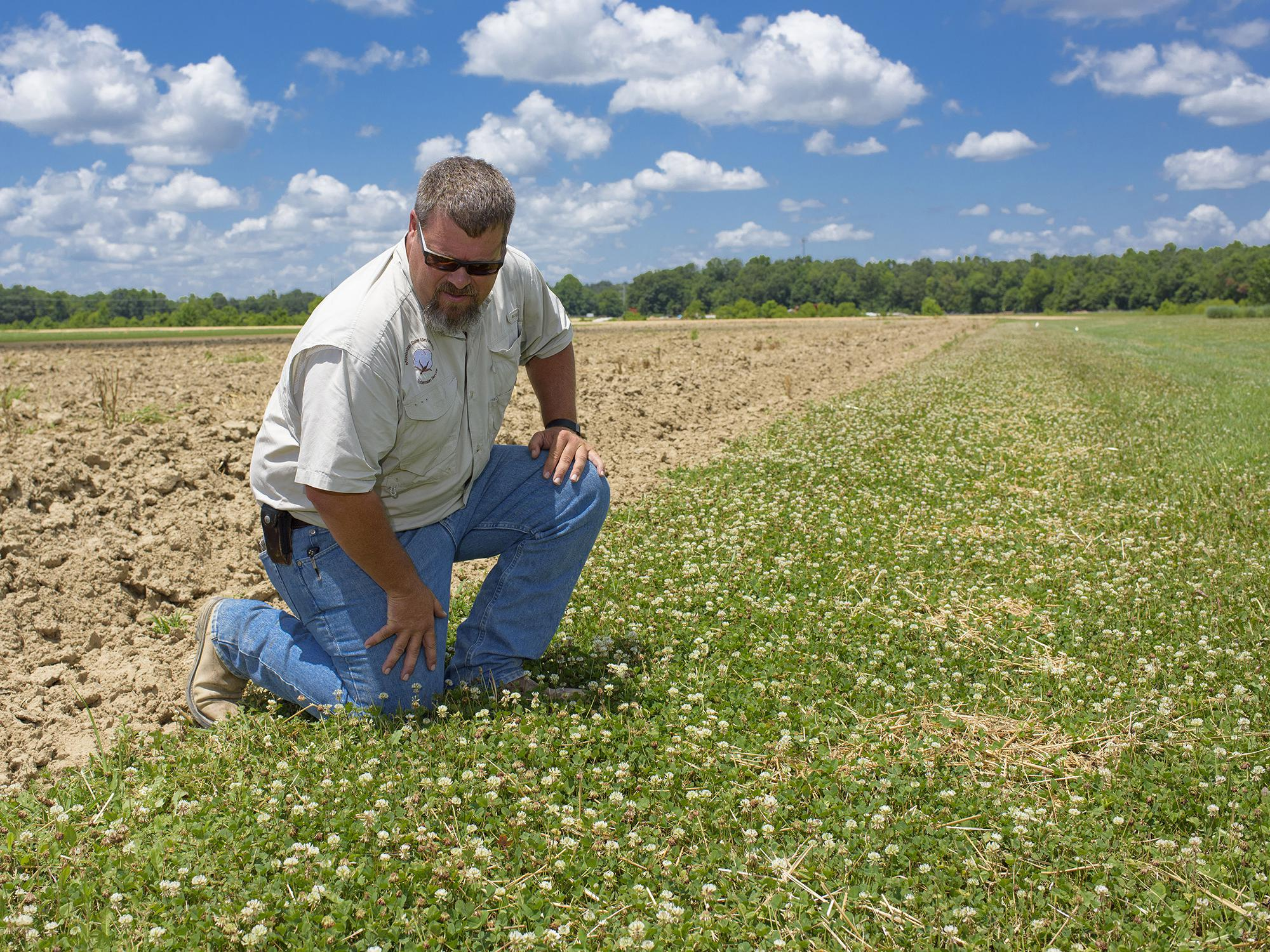 What looks like weeds to a farmer or landowner is forage for pollinators such as honeybees. Angus Catchot and other researchers at Mississippi State University are part of efforts to find management plans that balance competing needs. (Photo by MSU Extension Service/Kevin Hudson)