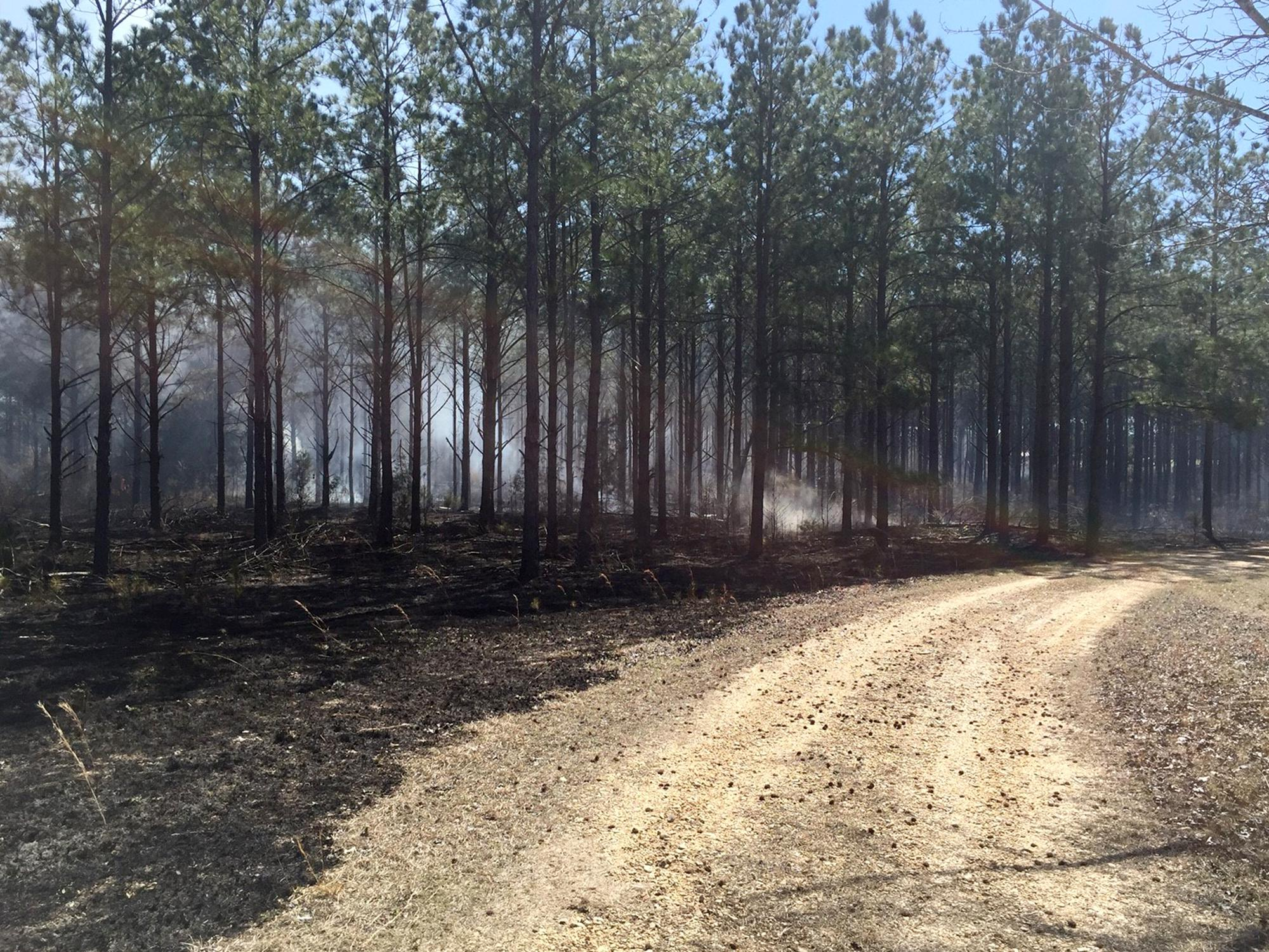 Prescribed burns can reduce the fuel available in forestland, significantly lessening the risk of an unmanaged forest fire. This managed fire was used on Monroe County timberland in February. (Submitted Photo by Matt Walters)