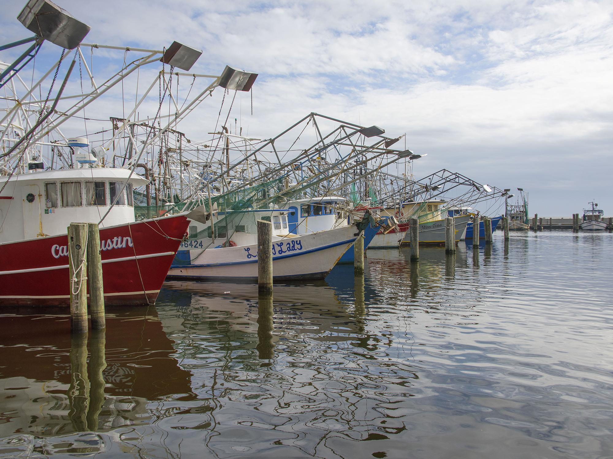 Shrimp boats at rest in the Biloxi Small Craft Harbor in Biloxi, Mississippi, Jan. 25, 2016. (Photo by MSU Extension Service/Kevin Hudson)