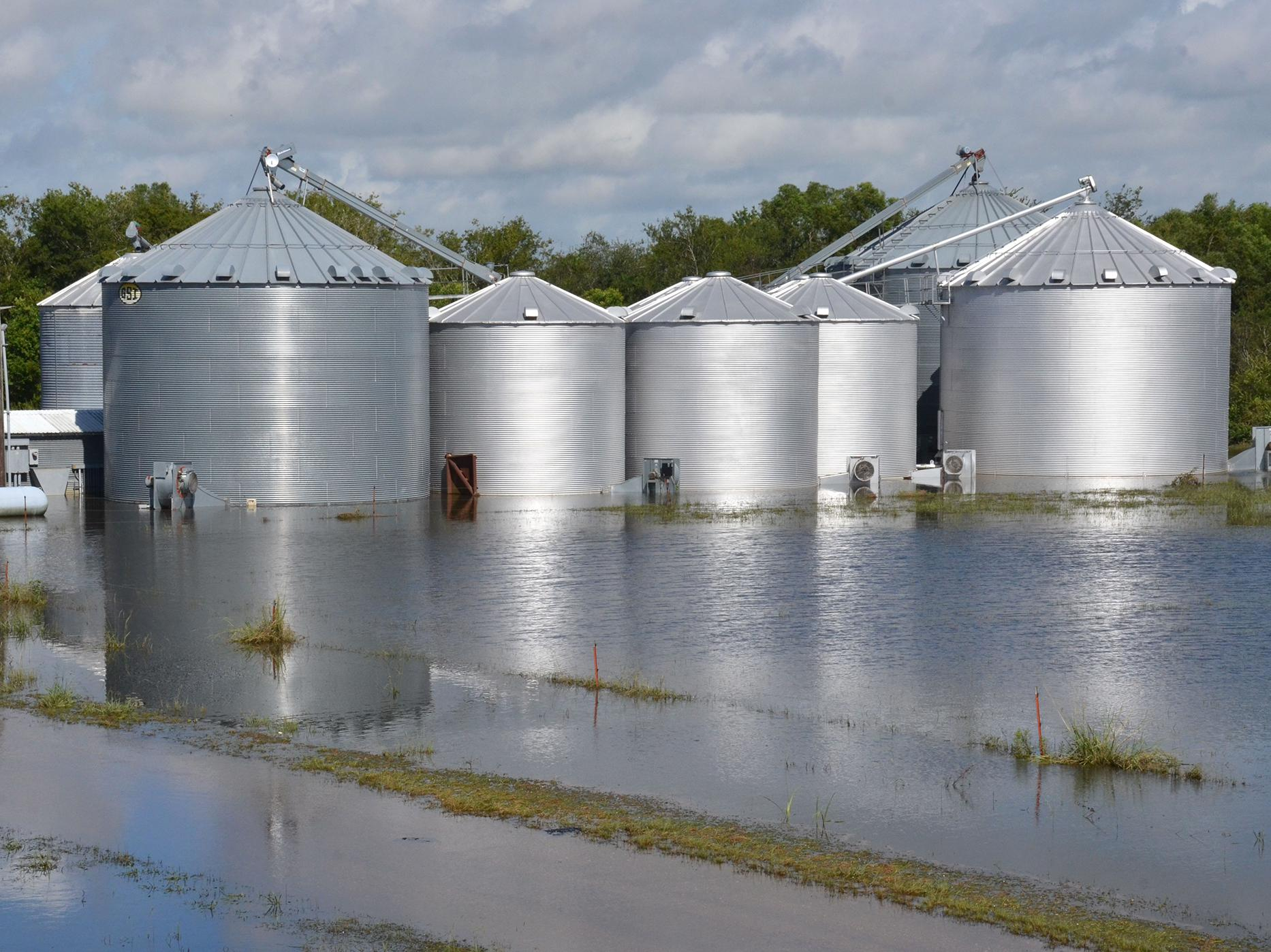 Flooded grain bins in Crowley, Louisiana, are among the many problems Louisiana producers are facing after historic flooding caused more than $100 million in damage to the state's agriculture. Mississippi State University Extension Service personnel have worked with state hay growers to send forage to producers in Louisiana affected by flooding earlier this month. (Photo by Louisiana State University AgCenter Communications/Bruce Schultz)