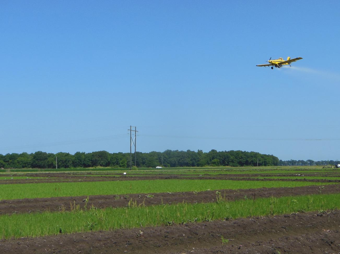 Nitrogen is applied to rice fields as urea, which is being sprayed by aerial application on this preflood field in Washington County, Mississippi, in June 2015. (Photo by MSU Extension Service/Lee Atwill)