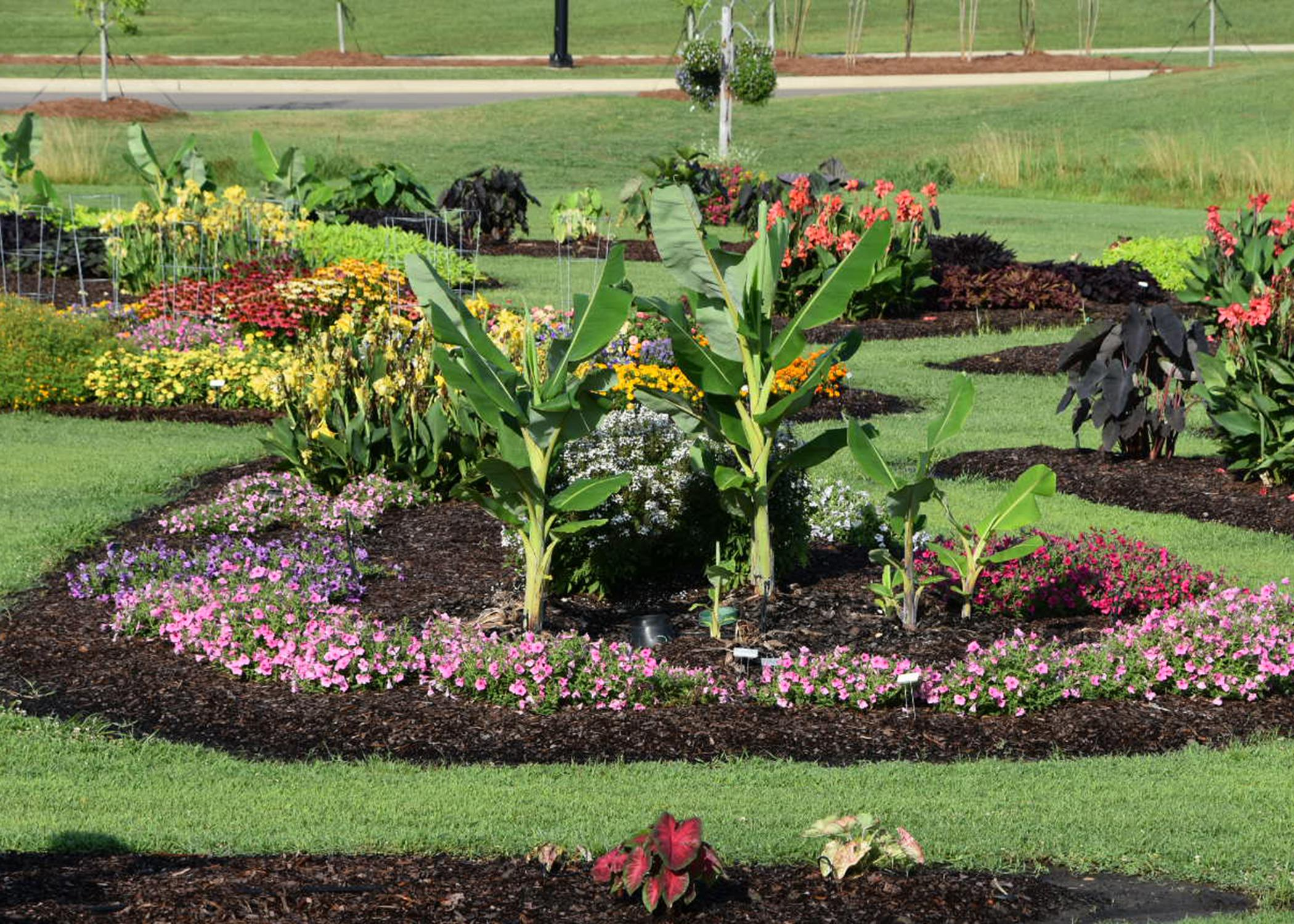 Mississippi State University established trial gardens across the state to generate plant growth and performance data and make fact-based recommendations. The Mississippi State trial gardens in Starkville capture data from one unique set of growing conditions. (Photo by MSU Extension Service/Gary Bachman)