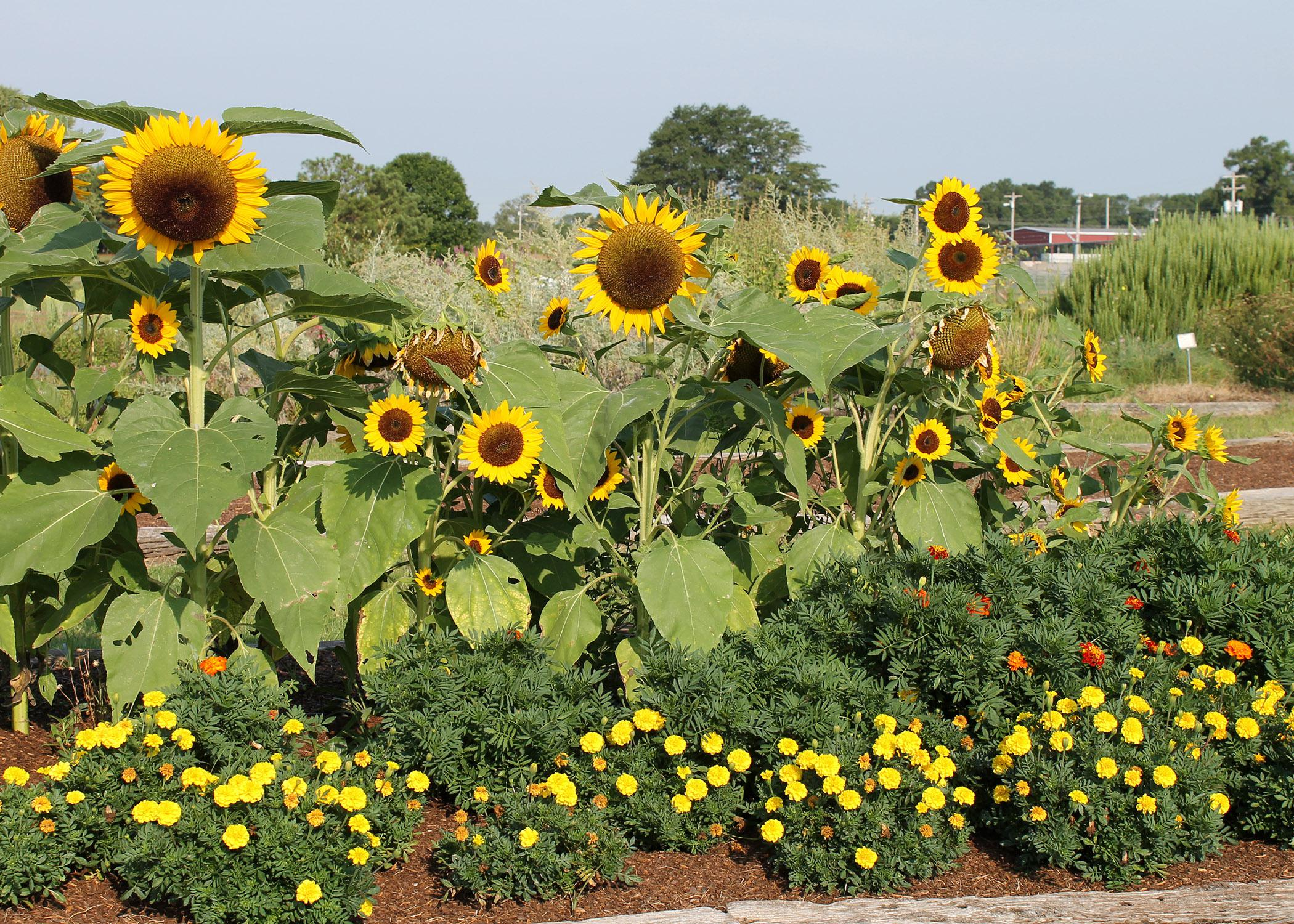 Mississippi State University horticulture experts will lead educational seminars, answer gardening questions, and offer walking and wagon tours of the gardens at the annual fall flower and vegetable tour at the North Mississippi Research and Extension Center in Verona on Sept. 20, 2014. (File Photo)
