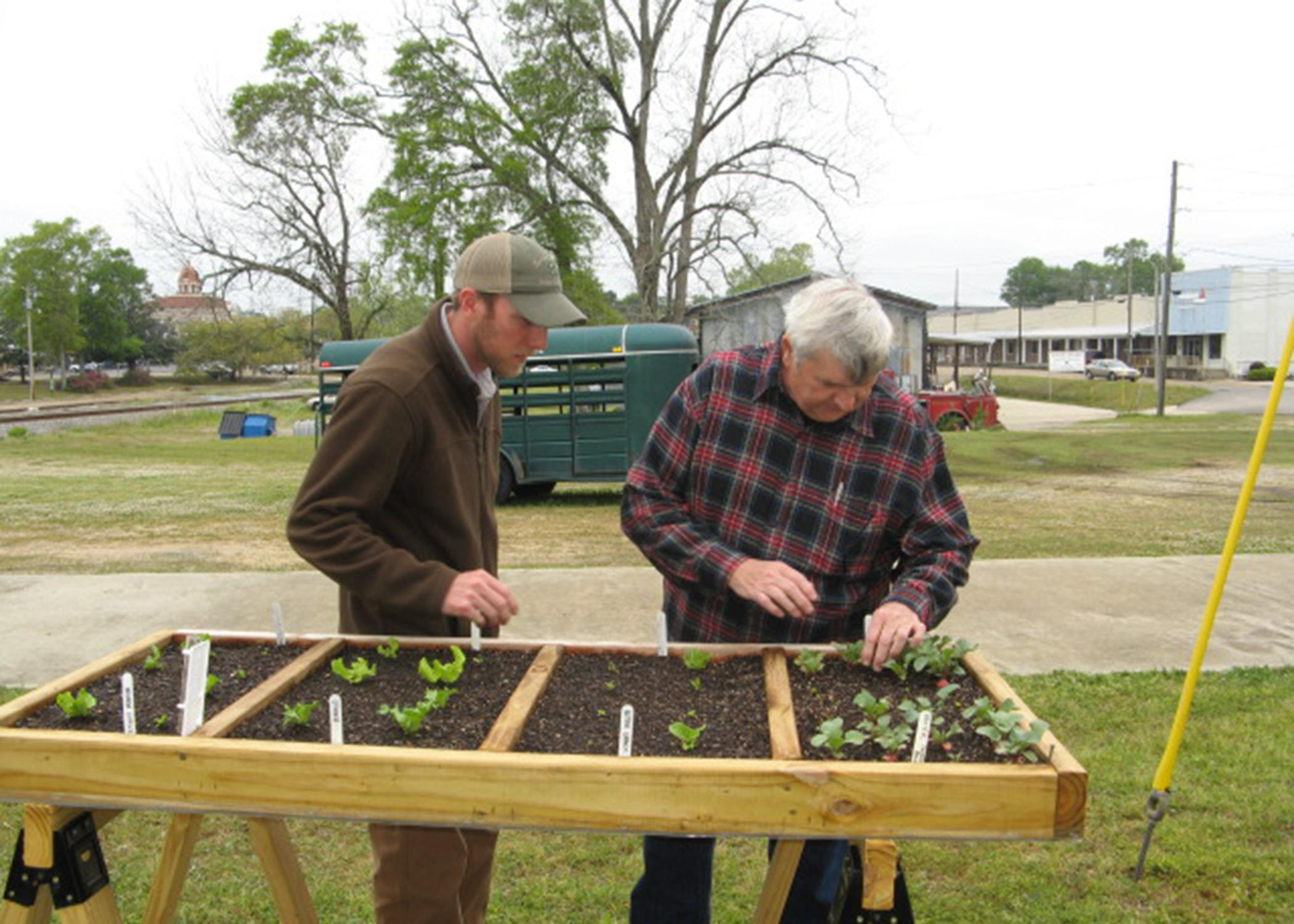 Ross Overstreet, Mississippi State University Extension agent in Lamar County, and Pine Belt Master Gardener Paul Cavanaugh check the progress of plants in the first demonstration salad table in 2013. The project grew in popularity and recently earned the Master Gardeners an international award for excellence. (File photo by MSU Extension Service/Liz Sadler)