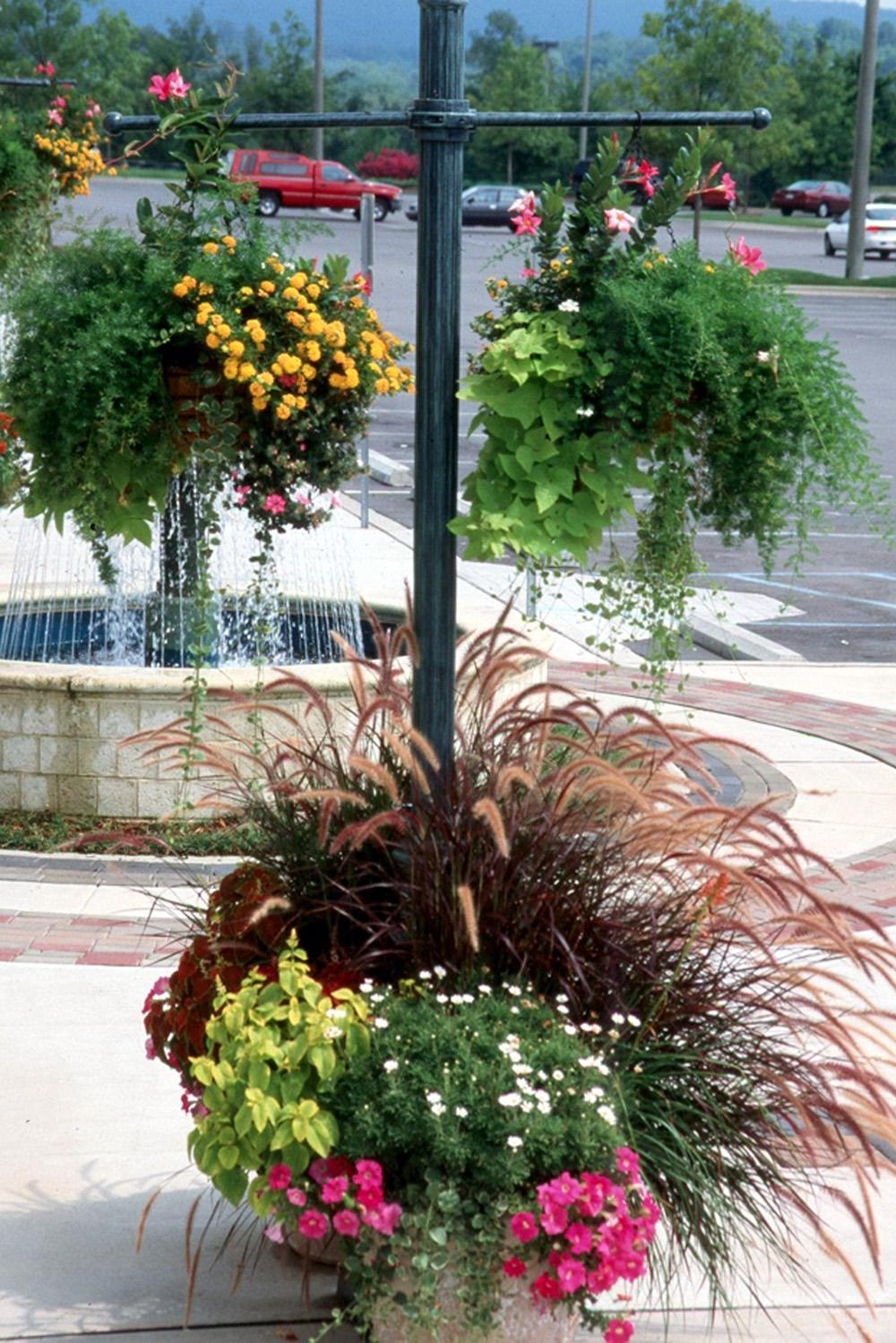 The plants are small, so don't forget to use grasses like Purple Fountain as the center plant.