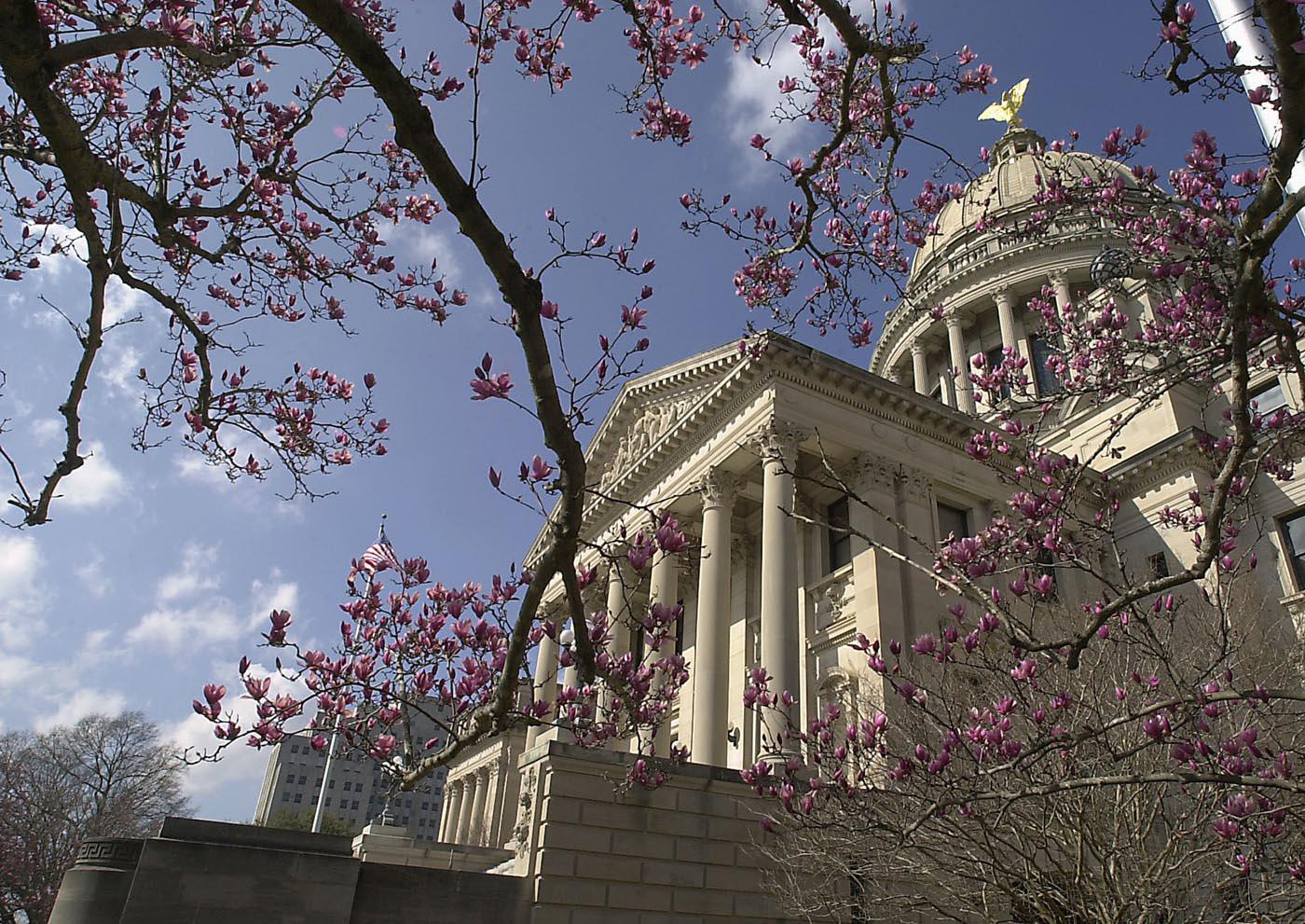 The Japanese Magnolia, also called saucer magnolia or tulip magnolia, features flowers that may reach 6 inches across in shades of pink to dark purple. The saucer magnolias pictured here provide a beautiful setting for the state Capitol.