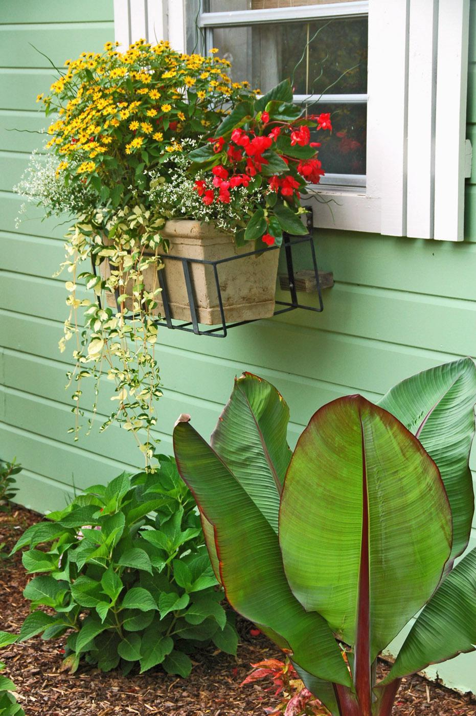 Allow Wojo's Gem vinca to hang down from baskets, creating a great vertical element. This planting uses Wojo's Gem with Dragon Wing Red begonia, Melampodium and Diamond Frost euphorbia for a dazzling combination. (Photo by Norman Winter)