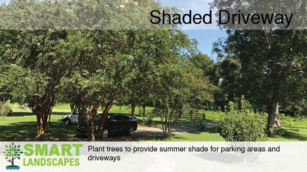 Trees shading driveway with cars