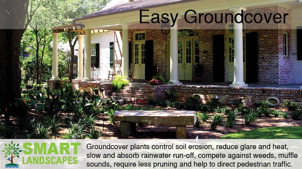 easy groundcover