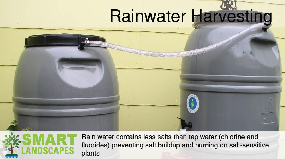 Water barrels harvesting rainwater from a residential roof