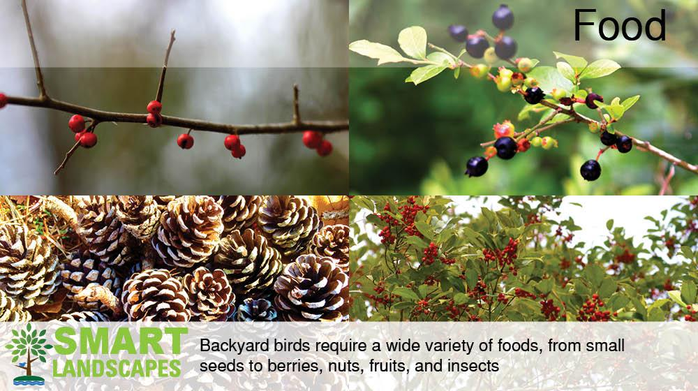 food sources for backyard wildlife