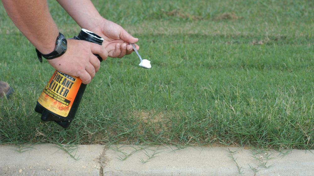 A man applying poison to a small fire ant mound in a green lawn.