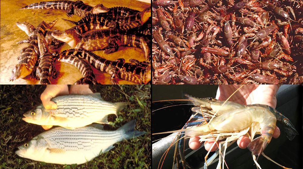other aquaculture species