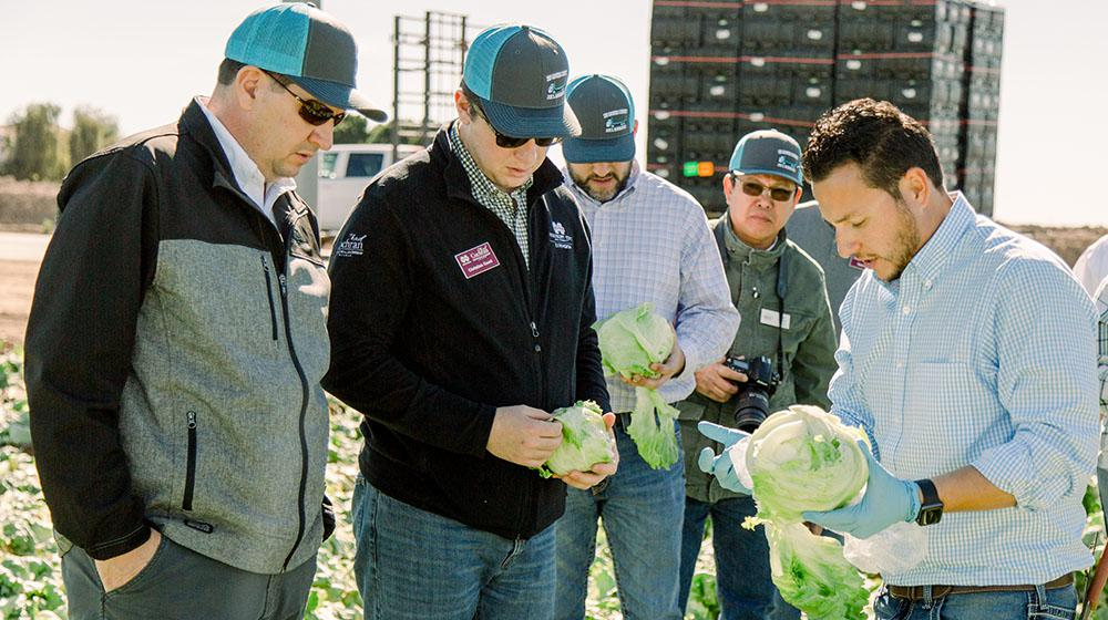 Group of men in field looking at head of lettuce.