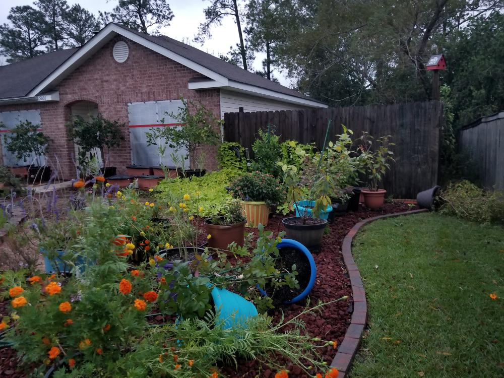 Several blue containers in this colorful landscape garden are blown over after heavy storm winds.