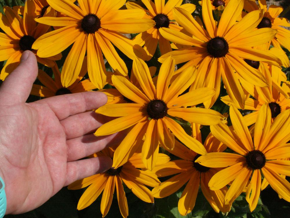 A man's hand reaches into a bouquet of bright yellow flowers.