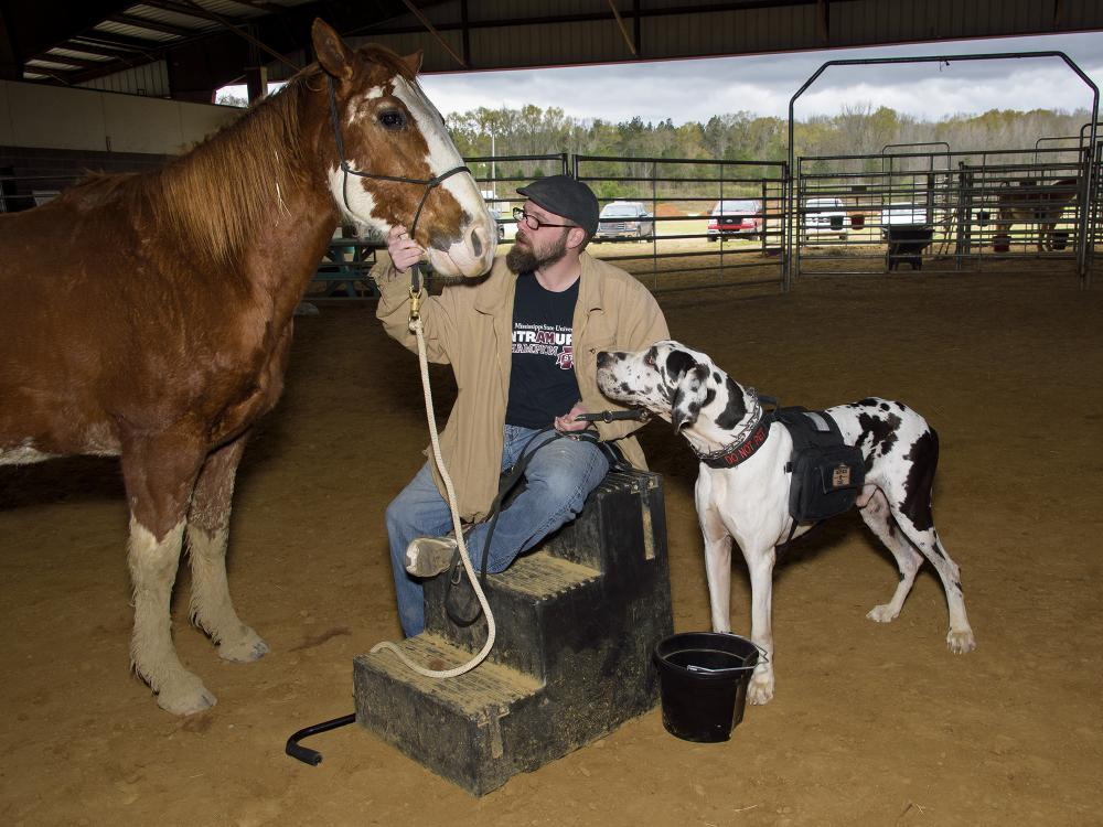 Man seated on a step stool in an arena looks at a horse while a large dog watches cautiously.