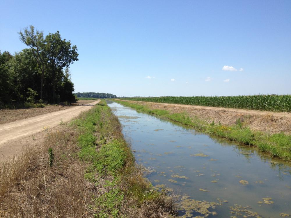 Large water-filled ditch rests between a dirt road and a field of green corn stalks.