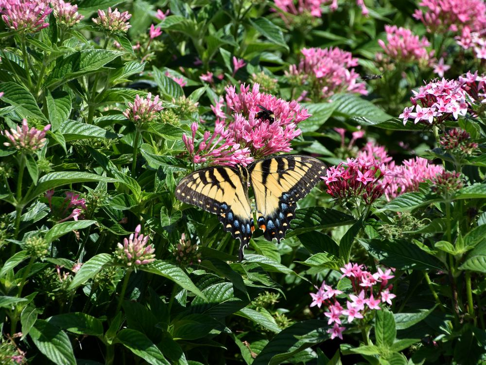 A yellow butterfly sits atop a green bush with pink flowers.