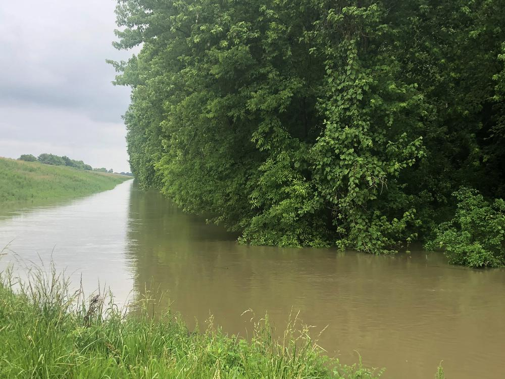 A green mass of hardwood trees rise up from floodwaters beside a long, raised levee.