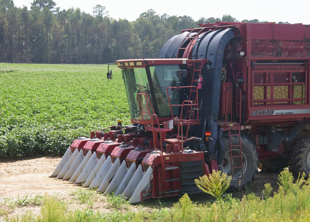 A red cotton picker sits in front of a cotton field.