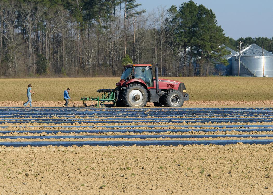 Two workers walk behind a red tractor in a field.
