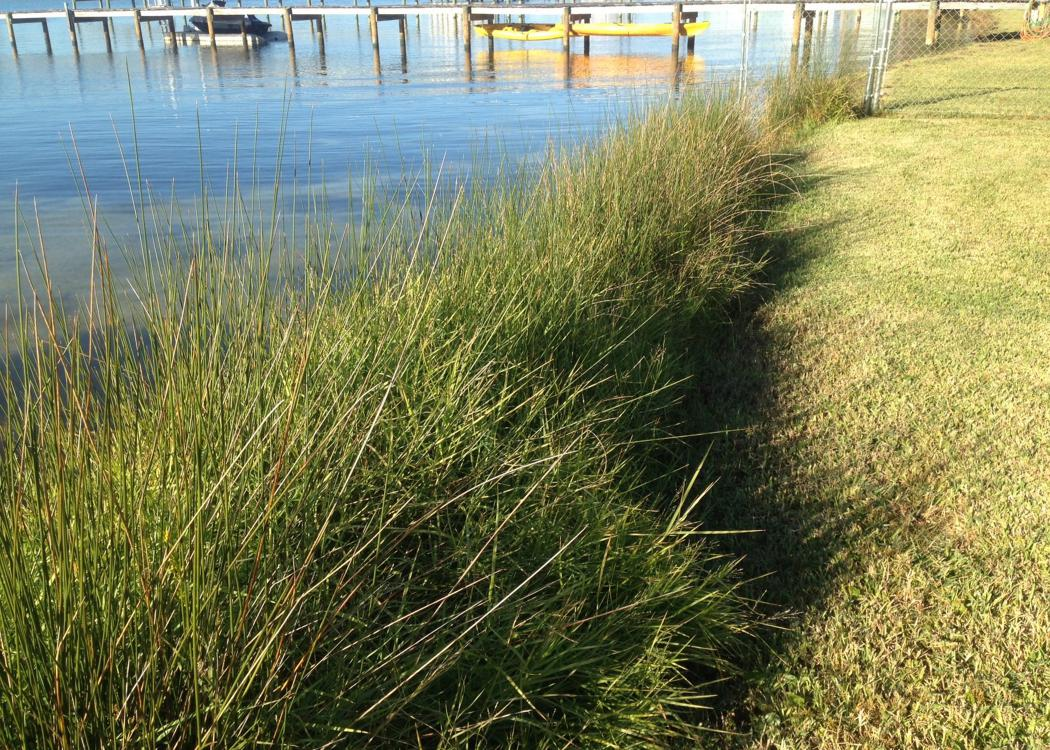 Tall grass protects water from invading dry land.