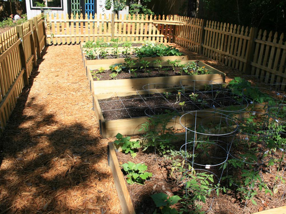 Adding hardscape materials such as treated lumber to build sides keeps raised-bed gardens looking tidy. (Photo by MSU Extension/Gary Bachman)