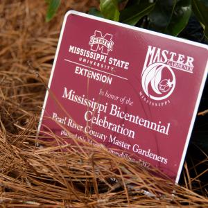 "A maroon sign ""in honor of the Mississippi Bicentennial Celebration"" rests on pine needles and is propped up by a magnolia limb."