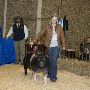 A teenage girl wearing a brown jacket leads a large black hog into a hay-floor arena.