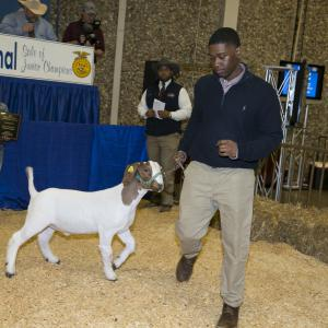 A teenage boy leads a white and brown goat into hay-covered arena.