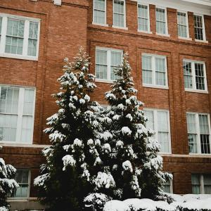 Four green fir trees coated in white snow in front of a red brick building with white windows.