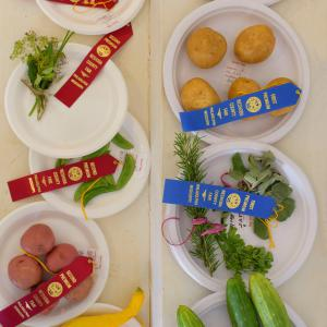 Ribbons are placed on award winning plates of herbs and vegetables