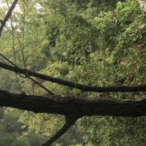 Large horizontal tree limb over water.