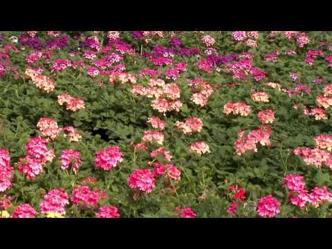 Landscape Color - Southern Gardening TV, April 13, 2014