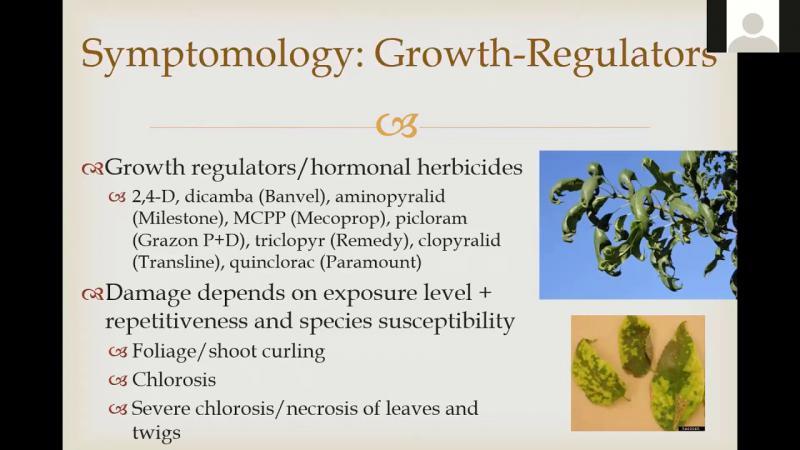 Herbicide Symptomology in Trees