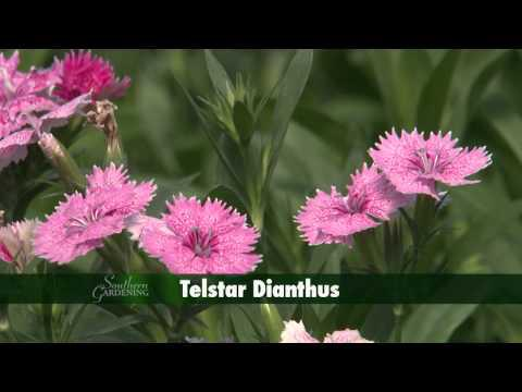 Fall Flowers - Southern Gardening TV - October 30, 2013