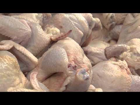 Handling Chicken Safely November 8, 2015