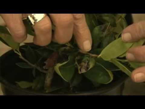 Selecting container plants