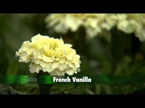 Southern Gardening TV - Marigolds, May 22, 2013