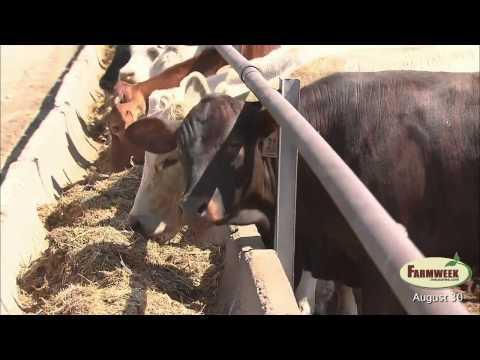 Farmweek - Entire Show - August 30, 2013