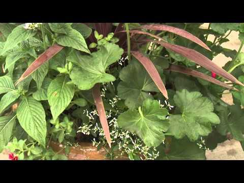 Southern Gardening TV - Summer Color Combos, May 15, 2013