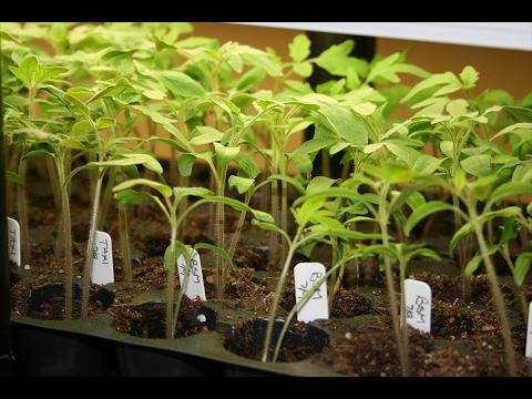 Starting Plants Indoors