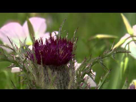 Ditch Flowers  - Southern Gardening TV - June 1, 2014