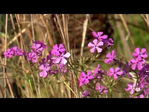 Native Plants  - Southern Gardening TV - June 8, 2014