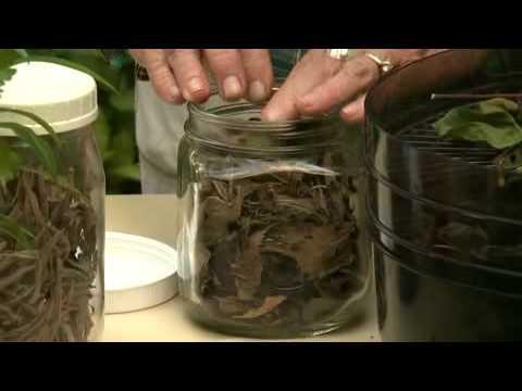 Harvesting and Preserving Herbs - MSU Extension Service