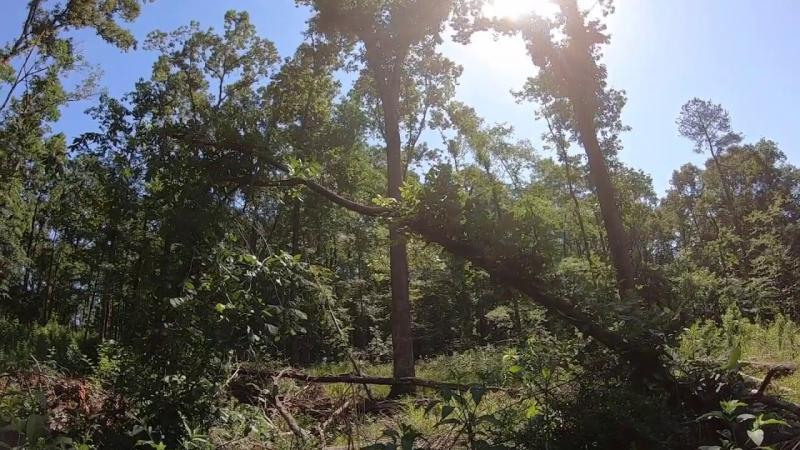 Diameter Limit Cutting vs Shelterwood Harvesting (Part 1)