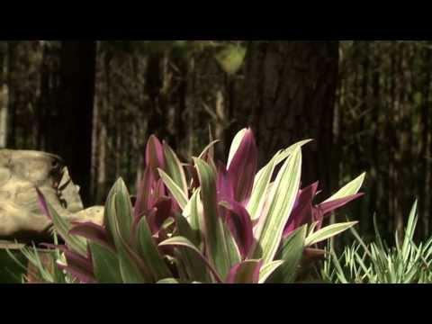 Rusty Pockets of Color  - Southern Gardening TV - September 3, 2013