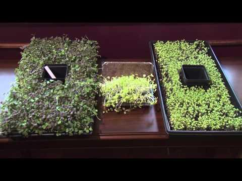 Microgreens - Southern Gardening, February 5, 2014