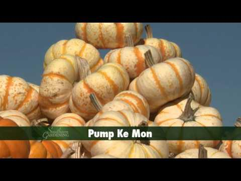 Pumpkins and Gourds - Southern Gardening TV, October 17, 2012